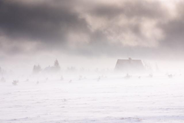Winterwind, Cínovec