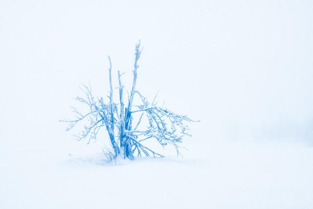 Zinnwalder Nebel