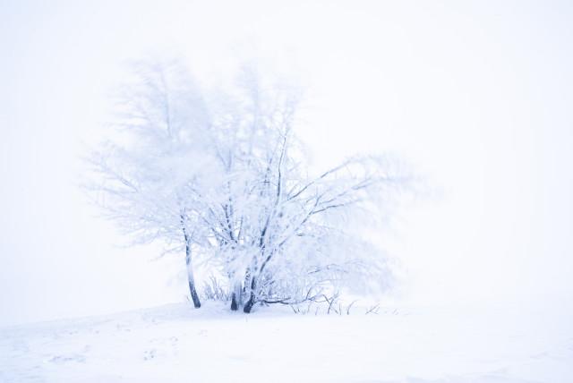 Baum im Böhmischen Wind