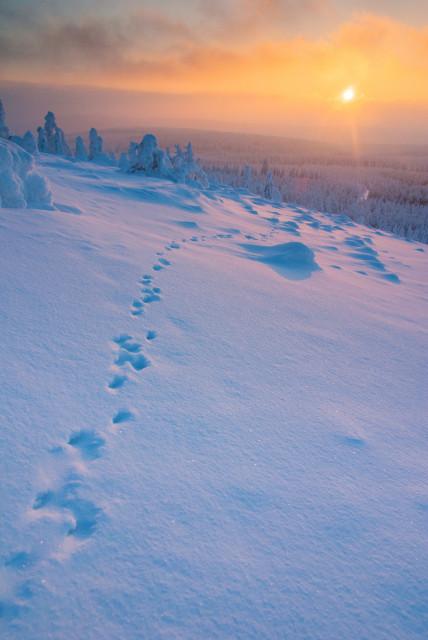 Tierspuren im Schnee auf dem Kahleberg