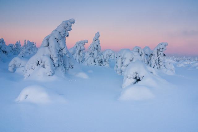 Verschneite Bäume auf dem Kahleberg