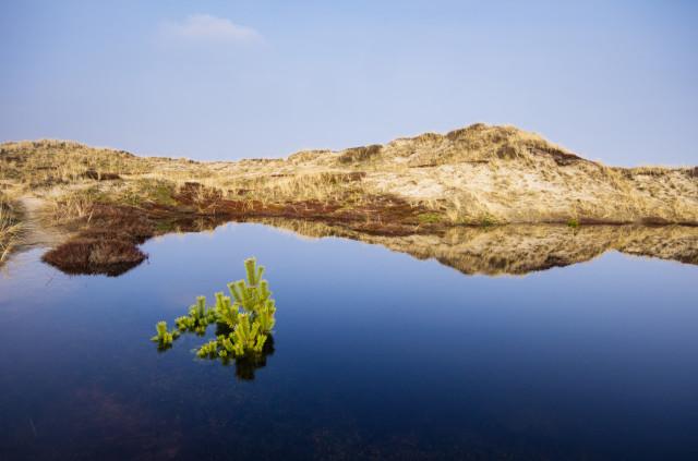 Dünenlandschaft auf Holmsland Klit