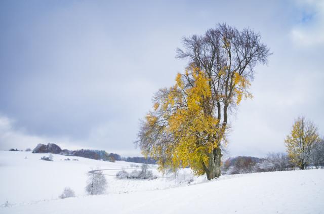 Erster Schnee bei Magolsheim