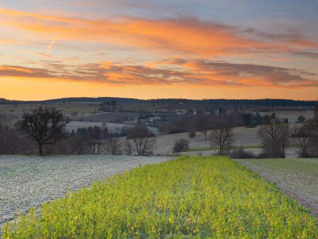 Landschaft bei Hamberg