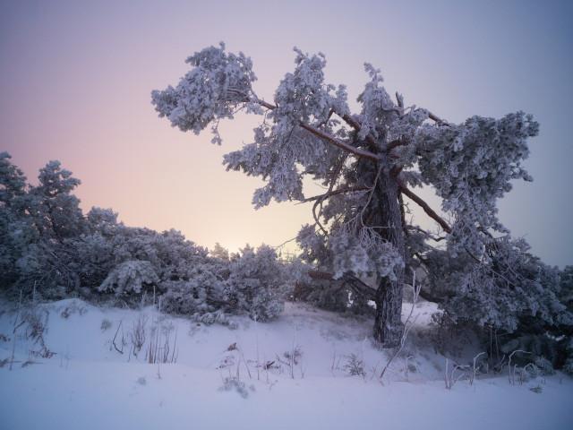 Baum im Winter beim Schliffkopfhotel