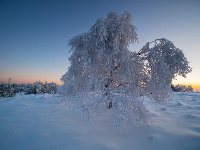 Baum im Winter auf der Hornisgrinde