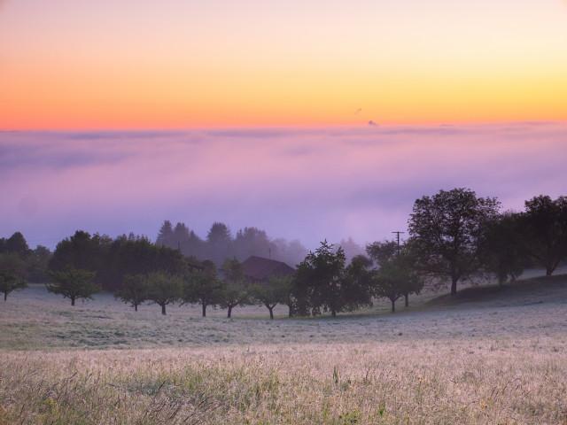 Morgennebel über Weil der Stadt