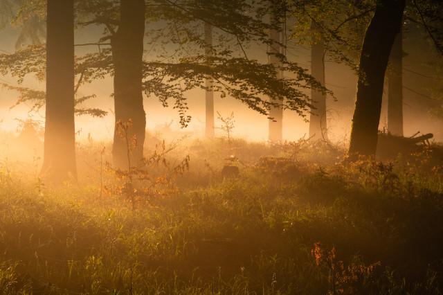 Frühnebel und Morgenlicht im Wald