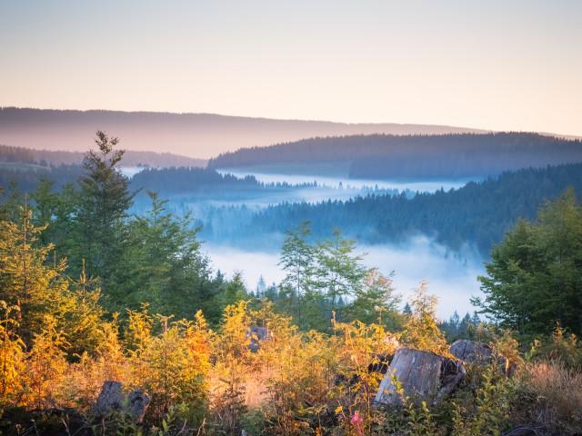 Blick über den Windgfällweiher (im Nebel)