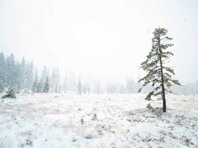Erster Schnee im Feldberggebiet (Hochmoor Hirschbäder)