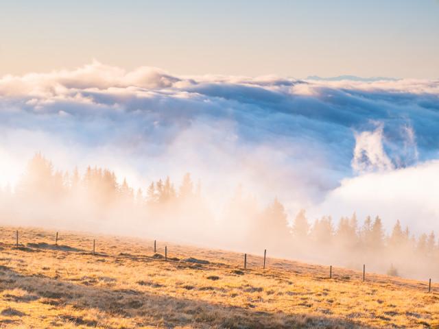 An der Nebelobergrenze auf dem Feldberg