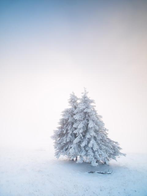 Neuschnee auf dem Feldberg