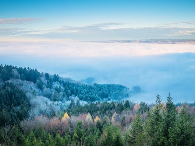 Blick vom Randen zum Schwarzwald