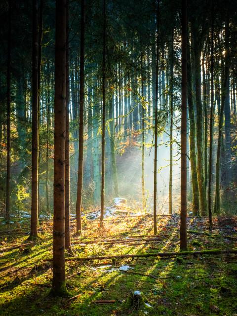 Lichteinfall im Wald