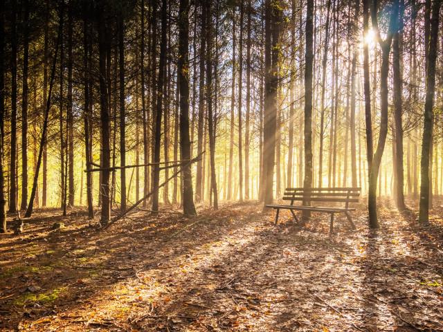 Wald-Idylle an der Gauchach