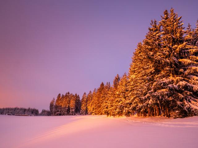 Waldrand im Morgenlicht