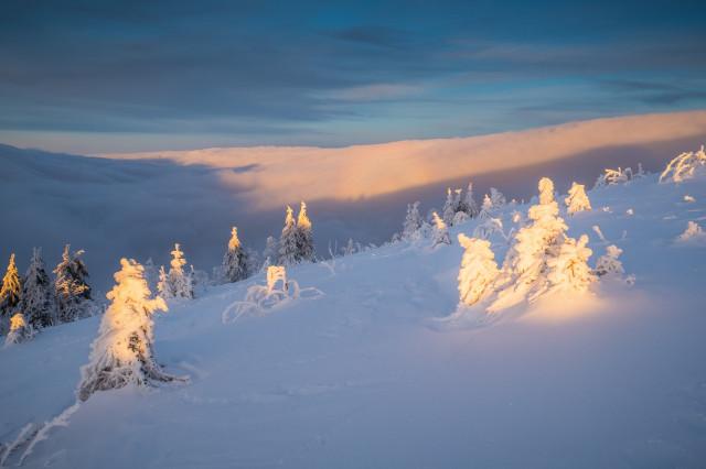 Winterlandschaft auf dem Feldberg und Glorie im Hochnebel