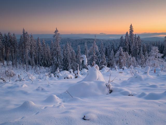 Winterwald Schwabenstutz