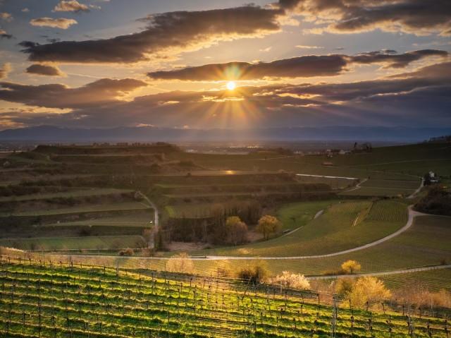 Sonnenuntergang bei Ihringen