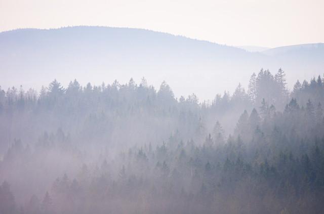 Wald im Dunst