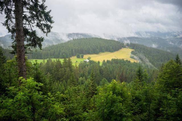 Schweizerwald, Aussicht nach Osten