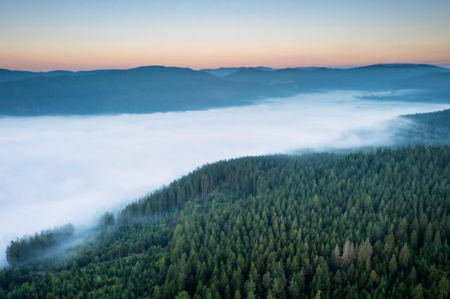 Morgennebel über dem Schluchsee