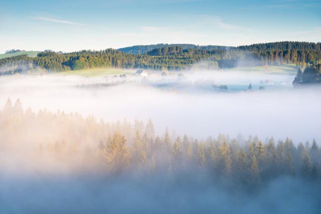 Morgendliche Nebelstimmung bei Hinterzarten
