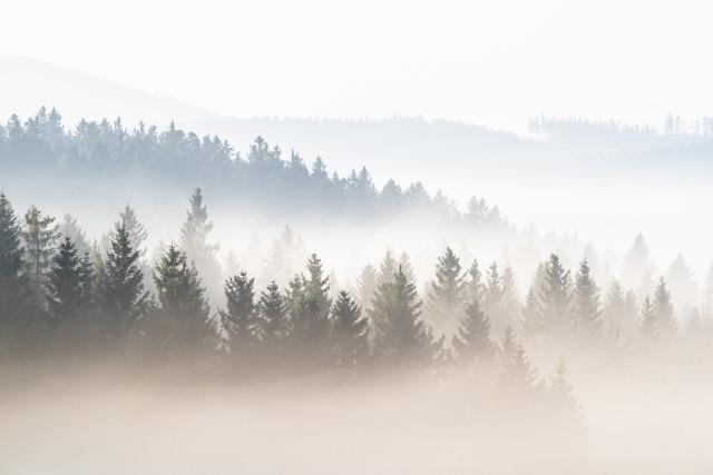 Wald über dem Nebel